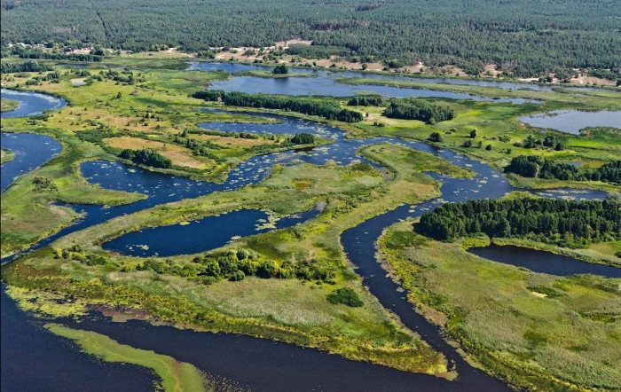 Днепровские плавни