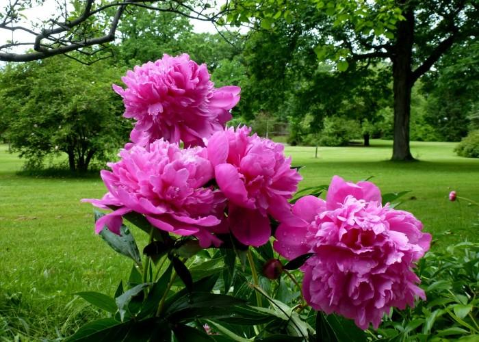 Бирмингемский ботанический сад
