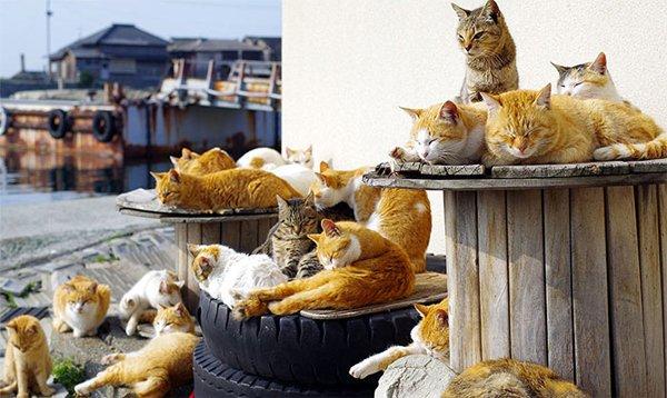 """Кошки и """"кошачий рай"""" на Аошима"""