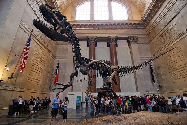 Музей Естественной Истории Нью-Йорке
