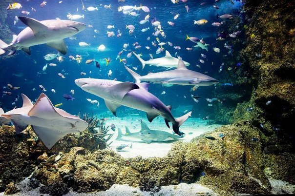 океанариум Атлант акулы