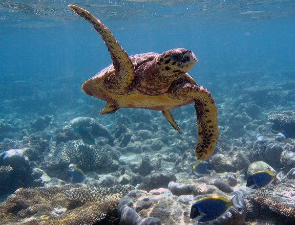 Черепаший риф