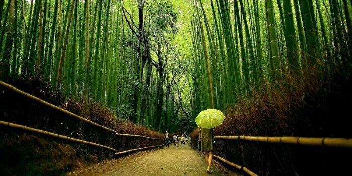 Япония - страна бамбуковых рощ