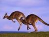 australia-22