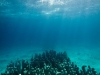 cancun-underwater-sculpture-park-11