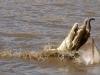 crocodile-attack-2