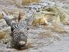 crocodile-attack-6