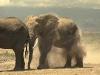 elephants-22