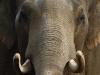 elephants-23