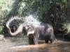 elephants-25