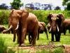 elephants-27