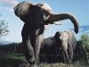 elephants-28