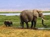 elephants-30