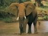 elephants-31