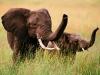 elephants-34