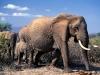 elephants-35