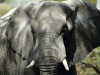 elephants-36