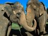 elephants-37