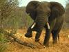 elephants-38