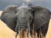 elephants-39