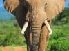 elephants-40