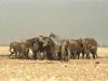 elephants-41
