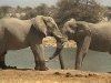 elephants-42