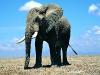 elephants-43