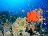 Reefscape at Gabr El Bint