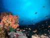 Reefscape in Nusa Penida