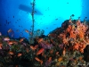 Boat on top of reef filled with anthias