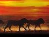 lions-18