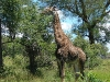 south-africa-53