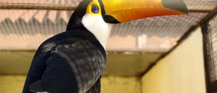 Место для семейного отдыха - парк птиц Воробьи