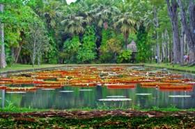 Ботанический сад Памплеус