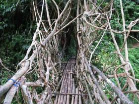 Индонезия - живой мост Джембатан Акар