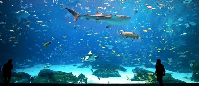 Среди рыб