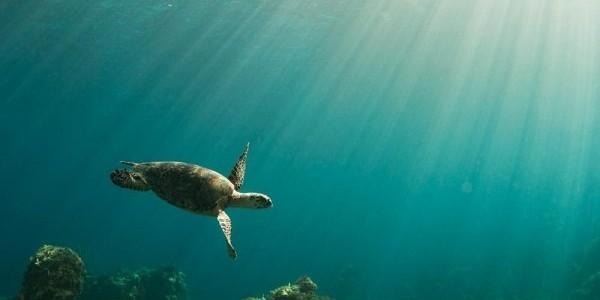 Кения: кораллы, мангры и черепахи