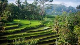 Ядовитые представители острова Бали